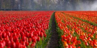 Holandia – praca dla par